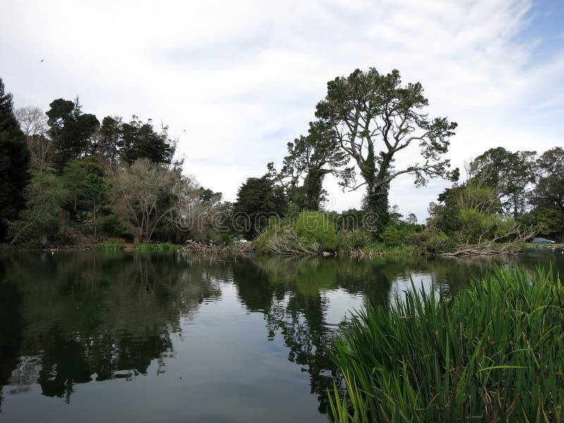 Λίμνη με τα ψηλά δέντρα στην απόσταση στοκ φωτογραφία με δικαίωμα ελεύθερης χρήσης
