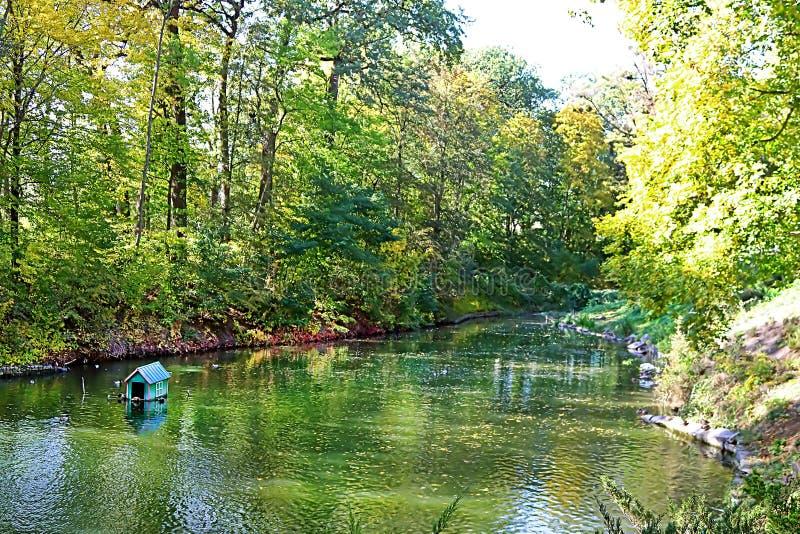 Λίμνη με τις πάπιες στο πάρκο Oleksandriya φθινοπώρου σε Bila Tserkva, Ουκρανία στοκ εικόνες