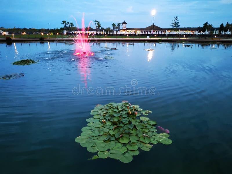 Λίμνη με τους κρίνους και την αρτεσιανή πηγή στοκ εικόνα