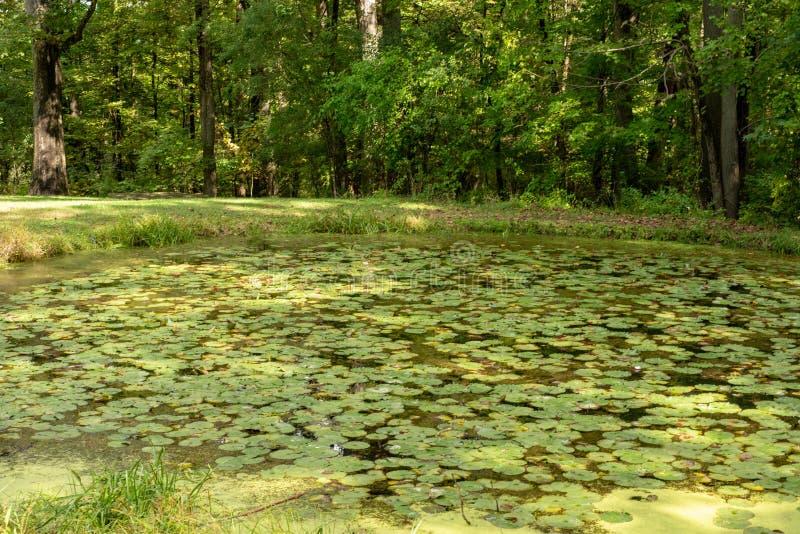 Λίμνη που προσπερνιέται από τα μαξιλάρια κρίνων στο κρατικό πάρκο Watkins Glen στο δυτικό κράτος της Νέας Υόρκης Φωτεινή ηλιόλουσ στοκ εικόνα με δικαίωμα ελεύθερης χρήσης