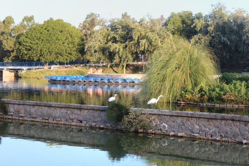 Λίμνη σε πάρκο στην Puebla του Μεξικού στοκ φωτογραφίες με δικαίωμα ελεύθερης χρήσης