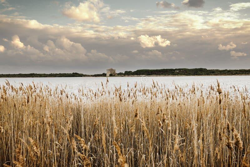 Λίμνη σε Maremma στοκ εικόνα