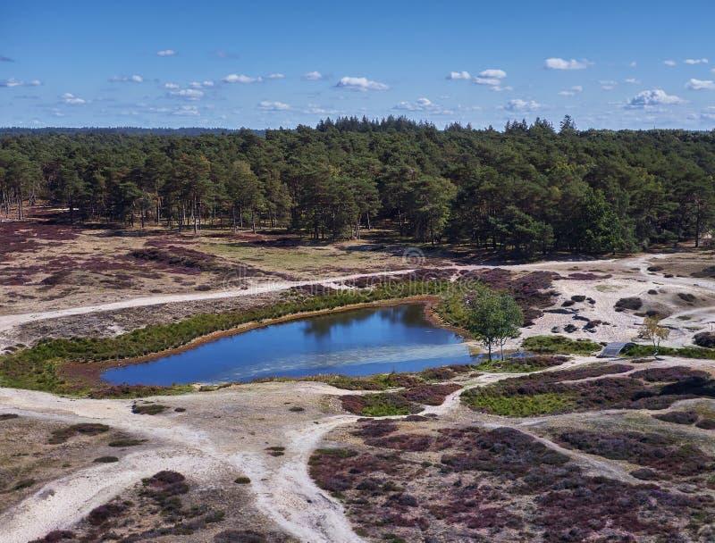 Λίμνη στο ανθίζοντας πάρκο φύσης ρεικιών στοκ φωτογραφία με δικαίωμα ελεύθερης χρήσης