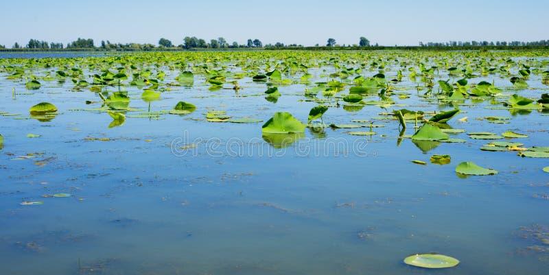 Λίμνη στο εθνικό πάρκο Pelee σημείου, Οντάριο, Καναδάς στοκ φωτογραφίες