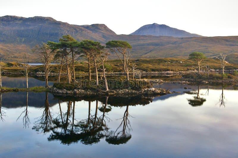 Λίμνη στο ηλιοβασίλεμα με τα δέντρα πεύκων, αντανακλάσεις στο νερό, σειρά βουνών στοκ εικόνα