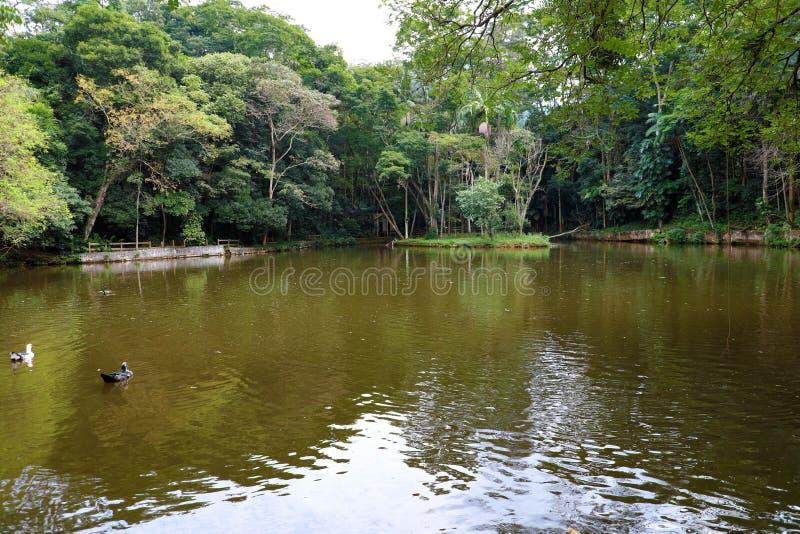 Λίμνη στο τροπικό δάσος του κρατικού πάρκου Jaragua, Βραζιλία στοκ εικόνες με δικαίωμα ελεύθερης χρήσης