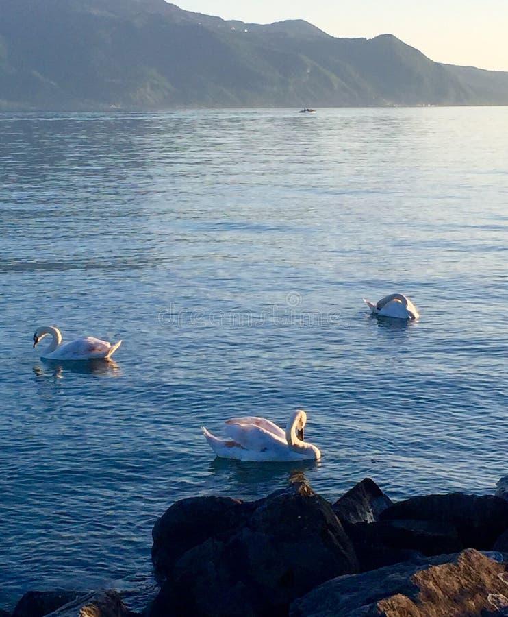 Λίμνη της Γενεύης στοκ φωτογραφία