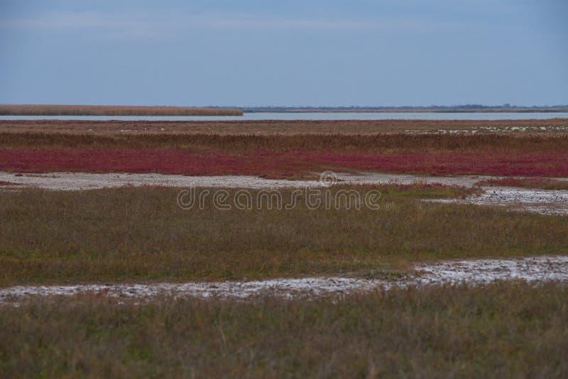 Λίμνη της Alba Balta στο autum με τα συμπαθητικά χρώματα στοκ φωτογραφία με δικαίωμα ελεύθερης χρήσης