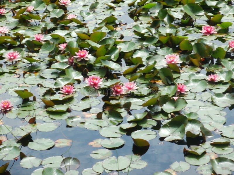 Λίμνη του Βανκούβερ στοκ φωτογραφία με δικαίωμα ελεύθερης χρήσης