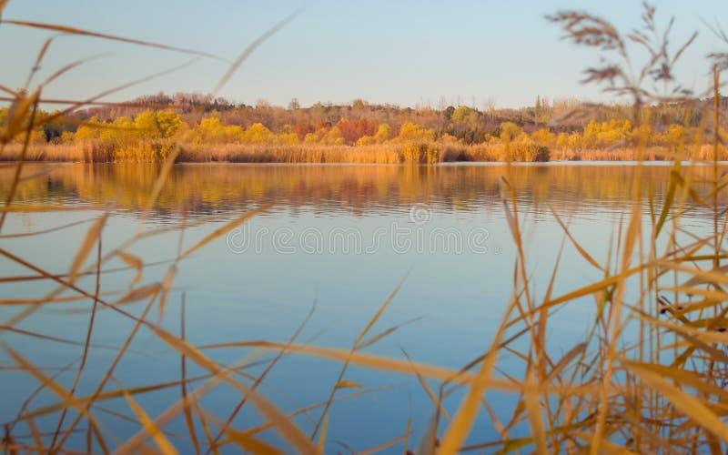 Λίμνη το φθινόπωρο με το χρώμα φθινοπώρου στοκ εικόνα