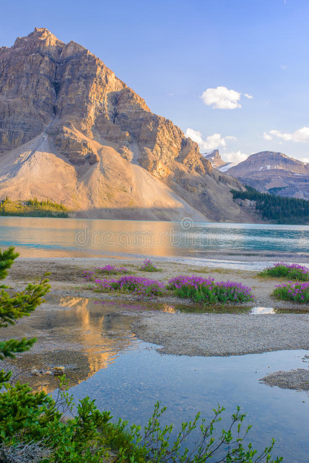 Λίμνη τόξων, εθνικό πάρκο Banff και εθνικό πάρκο ιασπίδων, Καναδάς στοκ φωτογραφία με δικαίωμα ελεύθερης χρήσης