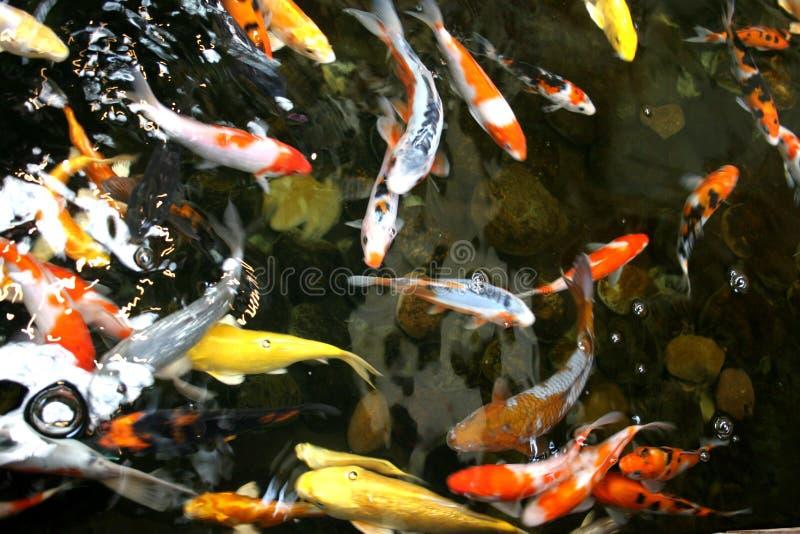 λίμνη ψαριών στοκ εικόνα με δικαίωμα ελεύθερης χρήσης