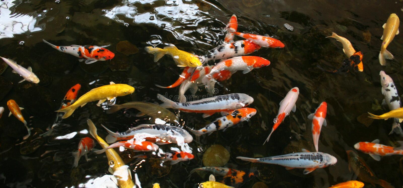 λίμνη ψαριών στοκ εικόνα