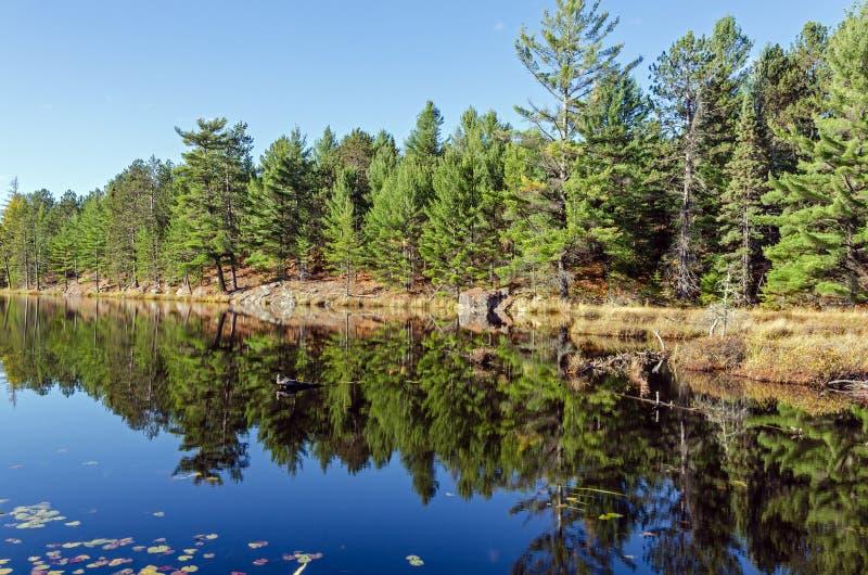 Λίμνη Algonquin στο πάρκο στοκ φωτογραφία με δικαίωμα ελεύθερης χρήσης