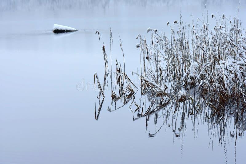 Λίμνη Bijote, περιφερειακό πάρκο Kurtuvenai στοκ εικόνα με δικαίωμα ελεύθερης χρήσης