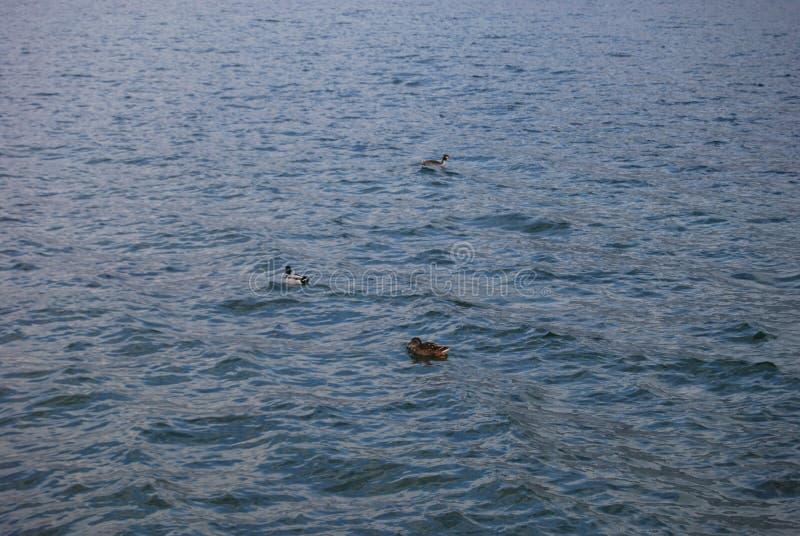 Λίμνη Iseo στοκ φωτογραφία με δικαίωμα ελεύθερης χρήσης