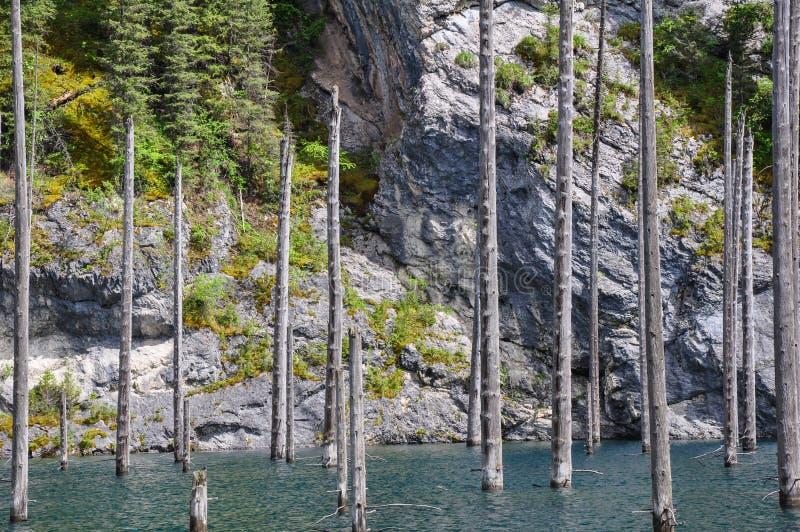 Λίμνη Kaindy στοκ φωτογραφία