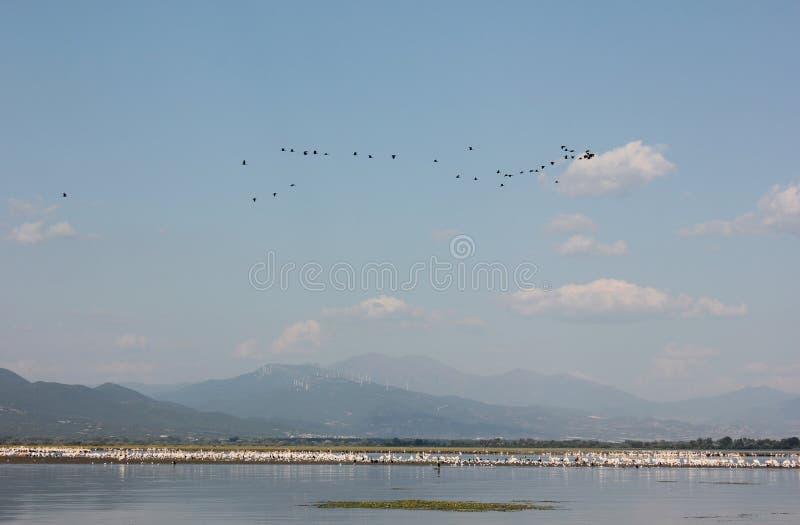 Λίμνη Kerkini Σέρρες Ελλάδα στοκ φωτογραφίες με δικαίωμα ελεύθερης χρήσης