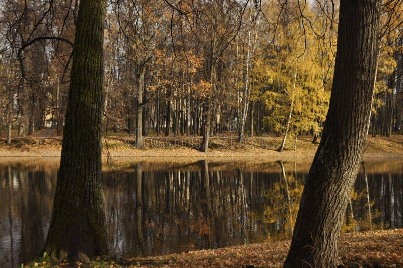 Λίμνη Linden στοκ εικόνα