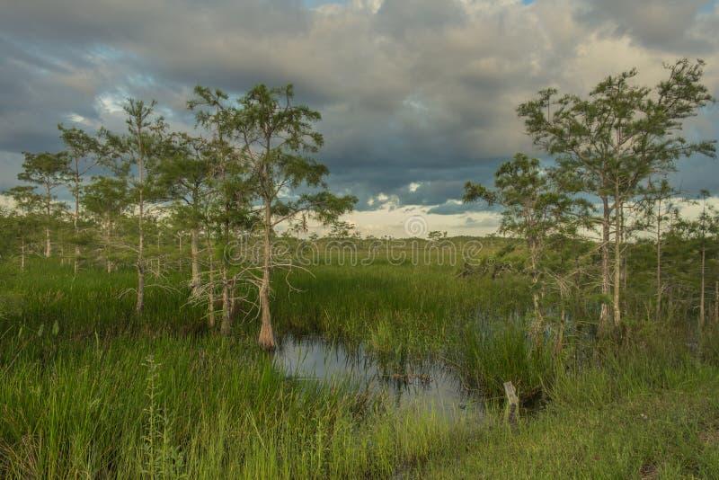 Λίμνη Paurotis μέσα στο εθνικό πάρκο Everglades στοκ φωτογραφίες