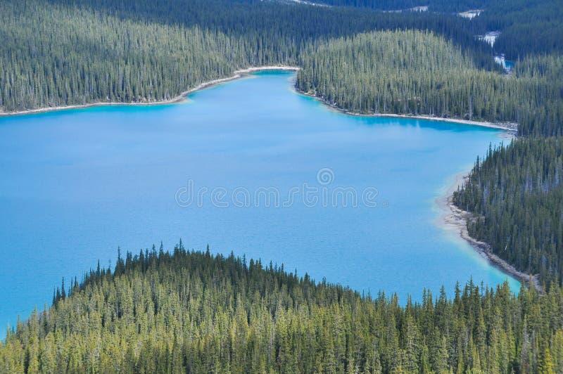Λίμνη Peyto, δύσκολα βουνά, Καναδάς στοκ εικόνες