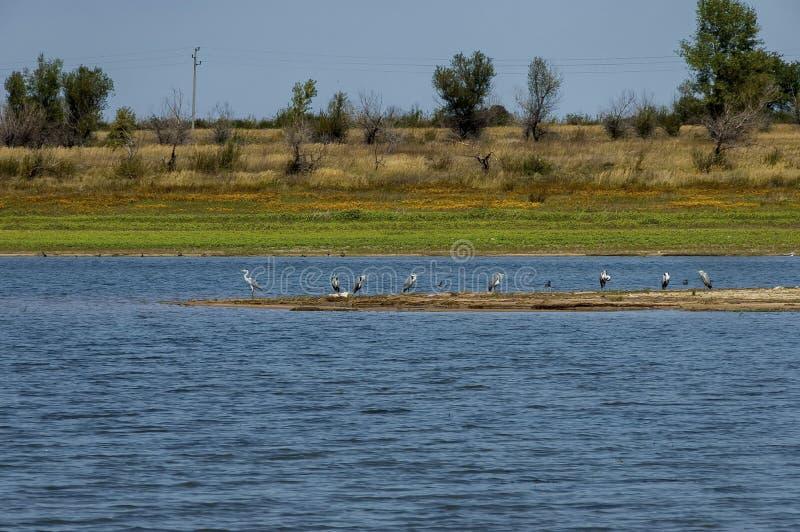 Λίμνη Rabisha και ομάδα μεγάλου ερωδιού ή grane στοκ εικόνα