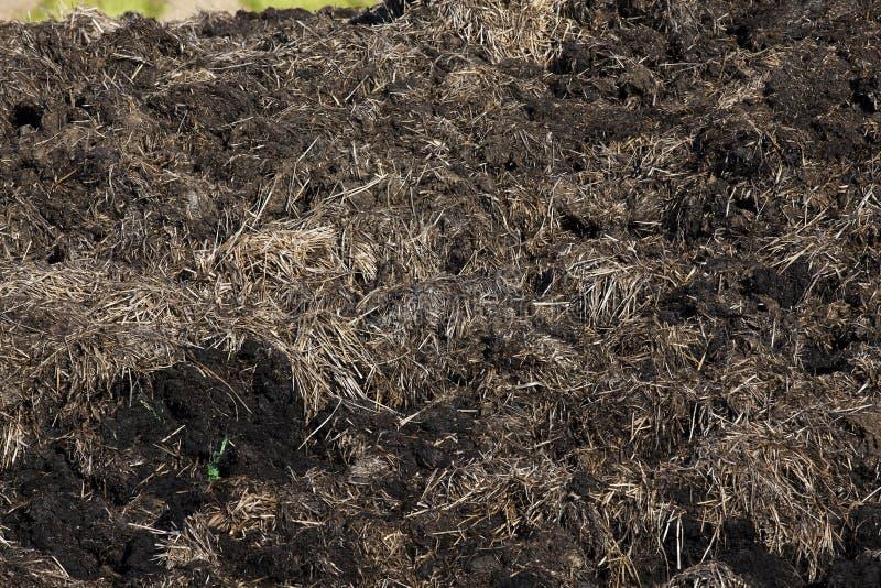 λίπασμα από τα βοοειδή στοκ φωτογραφία με δικαίωμα ελεύθερης χρήσης