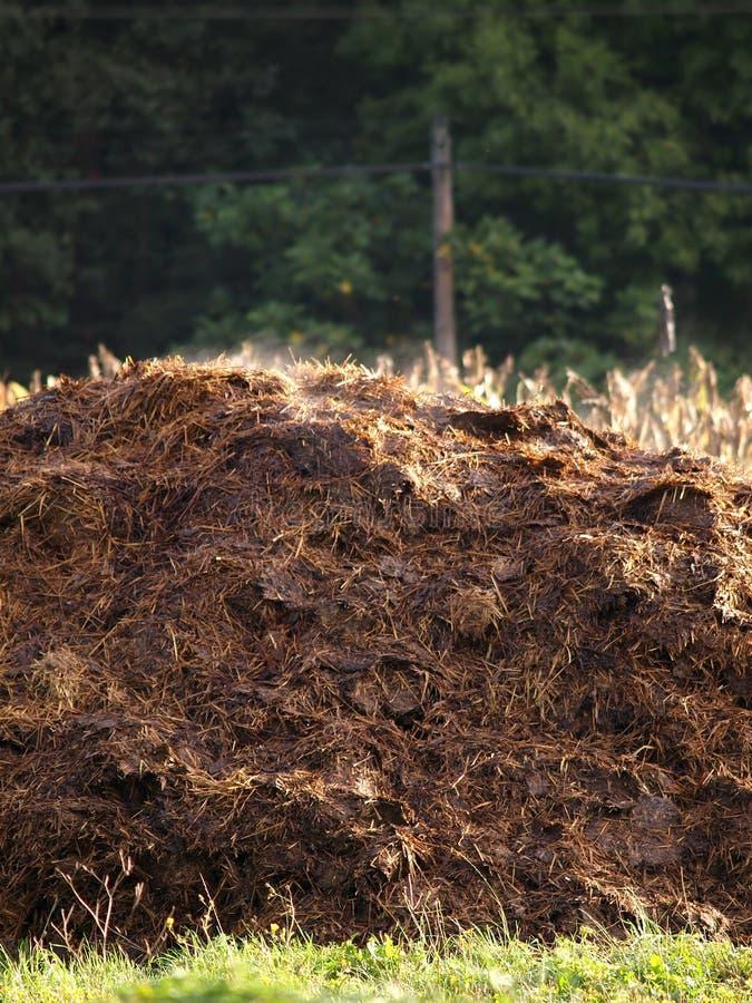 λίπασμα σωρών αγελάδων στοκ εικόνα με δικαίωμα ελεύθερης χρήσης