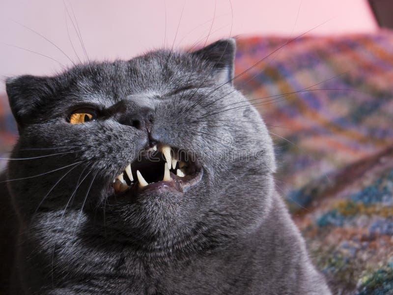 λίπος γατών στοκ εικόνα με δικαίωμα ελεύθερης χρήσης