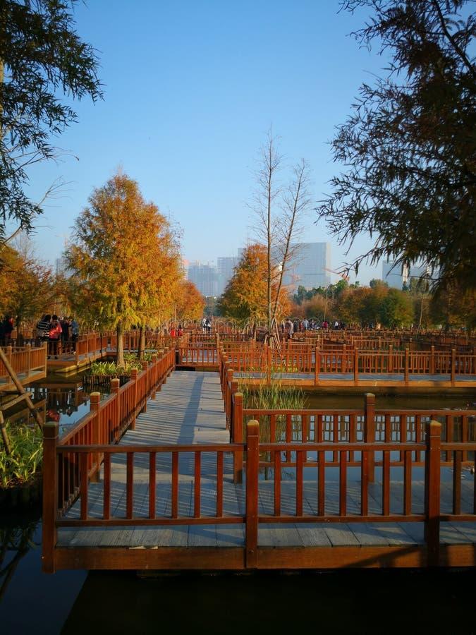 Λαβύρινθος στο μέρος υγρότοπου Xiamen στοκ εικόνα