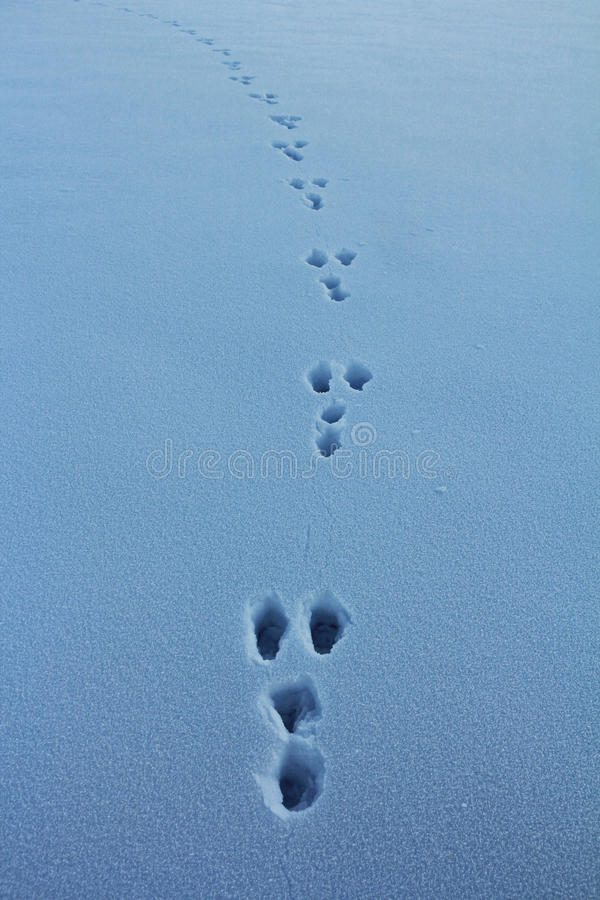 Λαγοί το χειμώνα στοκ εικόνες