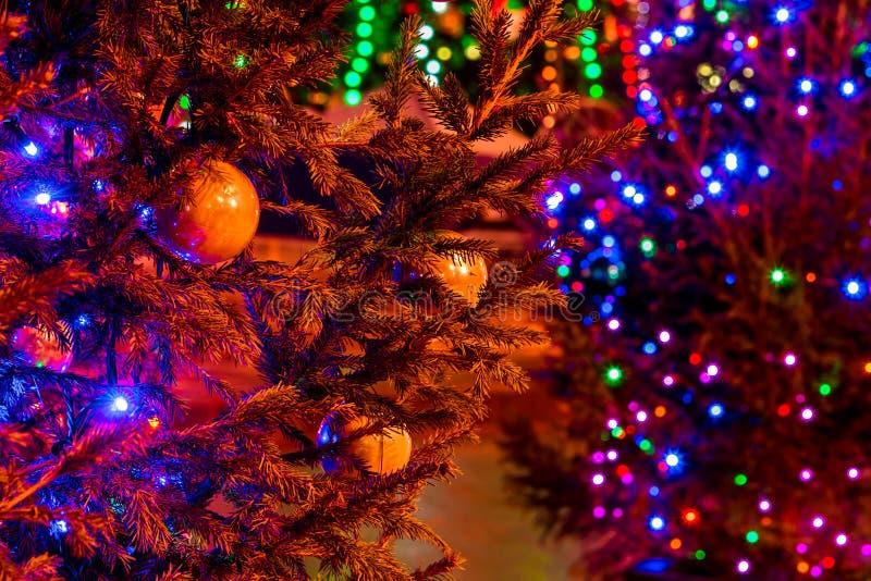 Λαμπρά φωτισμένα χριστουγεννιάτικα δέντρα στη σκοτεινή οδό στοκ εικόνες