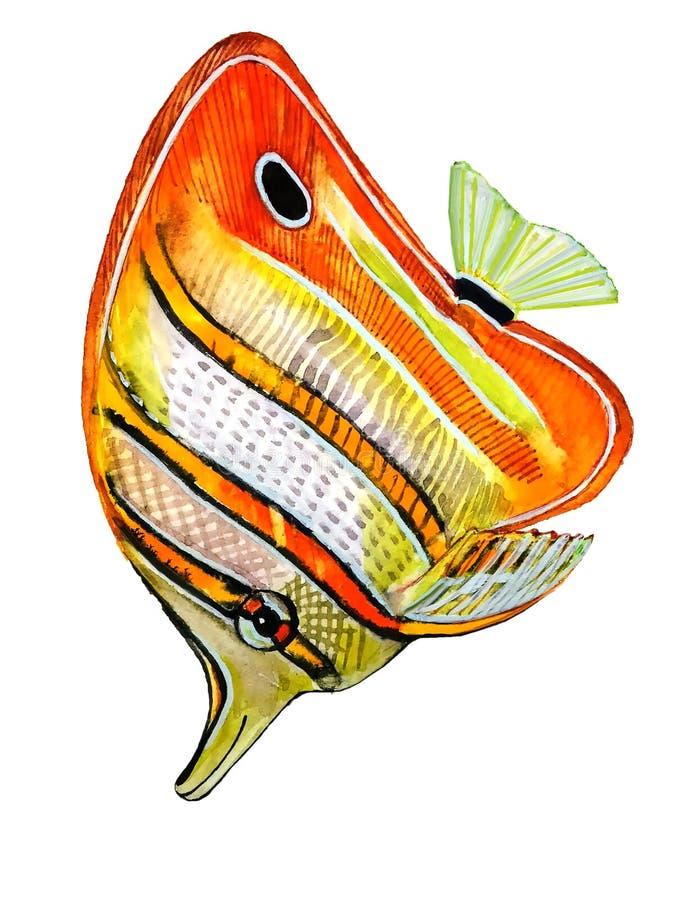 Λαμπρά χρωματισμένα ψάρια με τα πορτοκαλιά λωρίδες με μια μαύρη περίληψη διανυσματική απεικόνιση