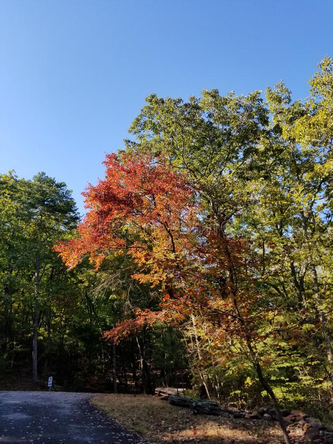 Λαμπρά χρώματα πτώσης - της όξινης απορροής δασικό φύλλωμα φθινοπώρου στοκ εικόνα
