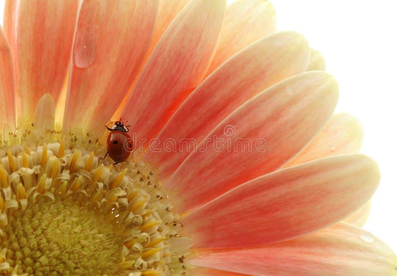 λαμπρίτσα λουλουδιών στοκ φωτογραφία με δικαίωμα ελεύθερης χρήσης