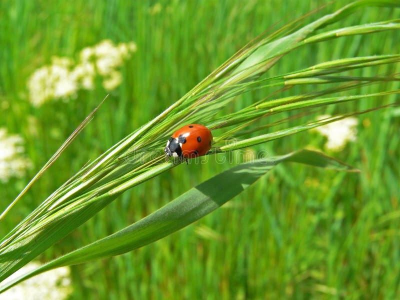 Download λαμπρίτσα στοκ εικόνα. εικόνα από μίσχος, φύλλο, κήπος - 13183843