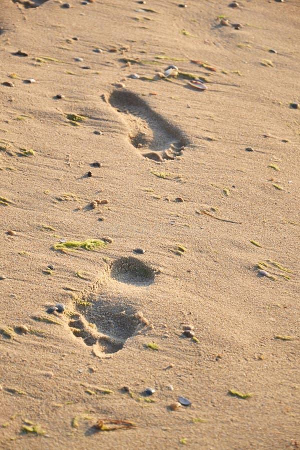 Λαμπρός, τέλειος πληρώνει τη σφραγίδα στην άμμο στην παραλία το καλοκαίρι στοκ φωτογραφίες