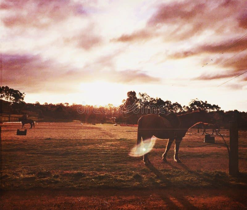 Λαμπρό άλογο στοκ εικόνα με δικαίωμα ελεύθερης χρήσης