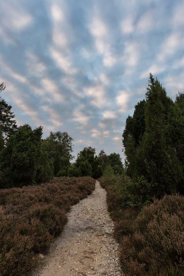 Λαντ γουρνών πορειών με την ανθίζοντας ερείκη Calluna vulgaris στο ρείκι Lueneburg στη χαμηλότερη Σαξωνία, Γερμανία στοκ εικόνα με δικαίωμα ελεύθερης χρήσης