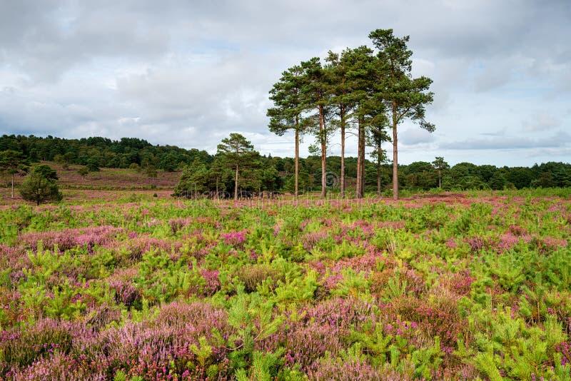 Λαντ του Dorset κοντά σε Wareham στοκ φωτογραφίες