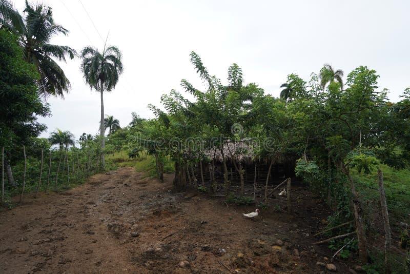 Λασπώδης διάβαση κοντά σε μια ξύλινη σιταποθήκη με τα δέντρα που περιβάλλουν το στη Δομινικανή Δημοκρατία στοκ εικόνες