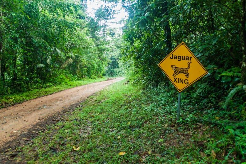 Λασπώδης δρόμος σε μια ζούγκλα που οδηγεί στο άδυτο άγριας φύσης λεκανών Cockscomb, Μπελίζ Ιαγουάρος σημαδιών xing που διασχίζει στοκ φωτογραφία