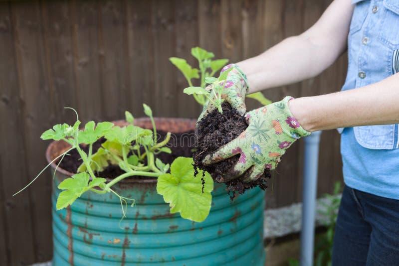 Λαστιχένια γάντια ε τα χέρια ριάνω στα πράσινα σριάνια για να εριισκεφΠστοκ φωτογραφία με δικαίωμα ελεύθερης χρήσης