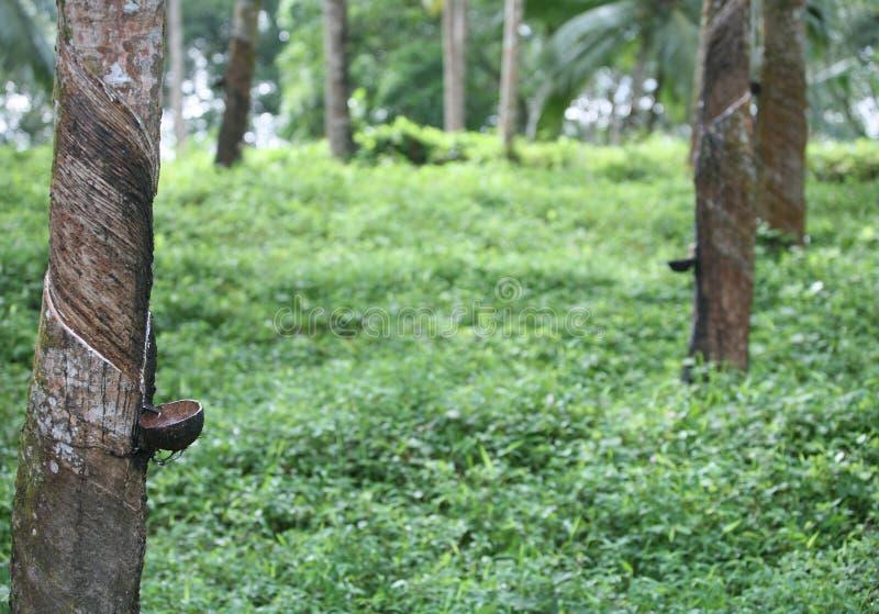 Download λαστιχένιο τρύπημα στοκ εικόνα. εικόνα από φυτεία, ινδία - 385629