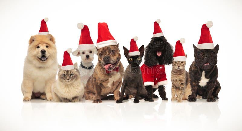 Λατρευτά γάτες και σκυλιά santa Ομάδα των Οκτώ με τα κοστούμια στοκ φωτογραφία με δικαίωμα ελεύθερης χρήσης