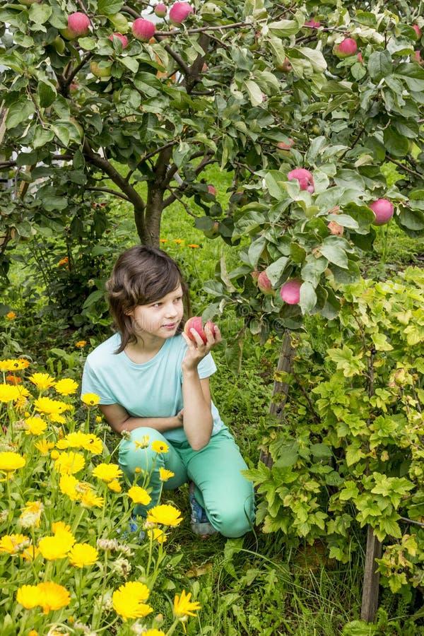 Λατρευτά μήλα επιλογής νέων κοριτσιών στον οπωρώνα δέντρων μηλιάς στοκ εικόνες