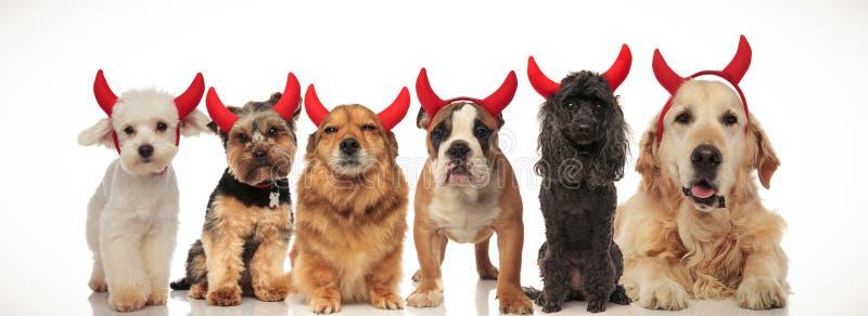 6 λατρευτά σκυλιά διαβόλων που γιορτάζουν αποκριές στοκ φωτογραφία