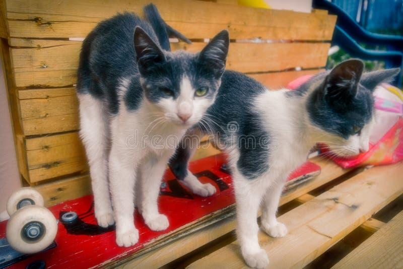 Λατρευτές γάτες που εξετάζουν τη κάμερα στοκ εικόνες