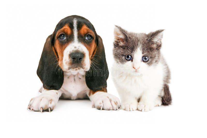 Λατρευτή συνεδρίαση κουταβιών και γατακιών κυνηγόσκυλων μπασέ από κοινού στοκ φωτογραφία