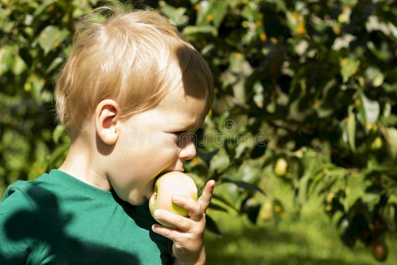 Λατρευτός λίγο προσχολικό αγόρι παιδιών που τρώει το πράσινο μήλο στο οργανικό αγρόκτημα τρόφιμα υγιή Συγκομιδή στοκ φωτογραφία